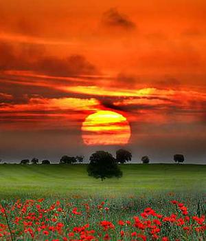 Paisajes hermosos Imagenes-paisajes-flores