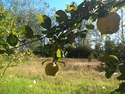 www.orillera.blogspot.com