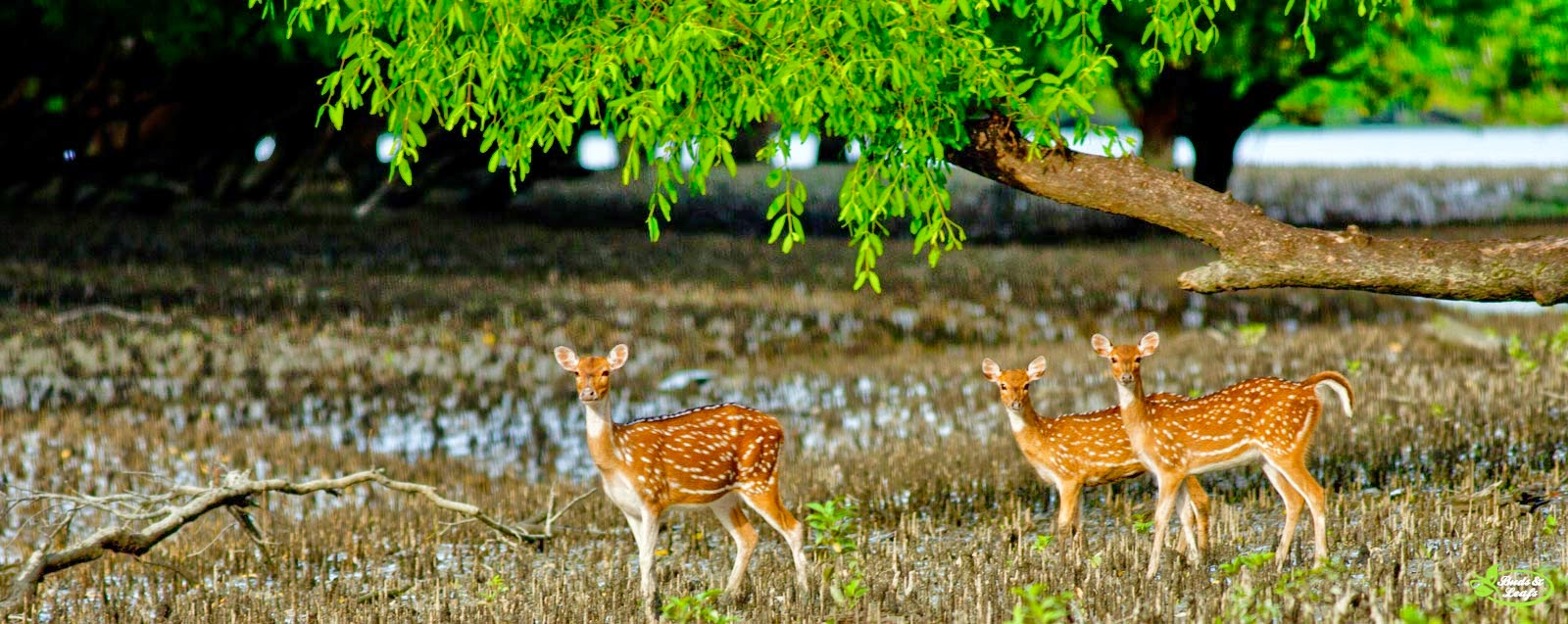 the sundarban forest We are specialized in customized sundarban tour package from kolkata at best price for booking call +91 9609358441.