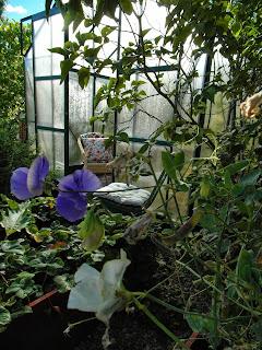 Planera din trädgård, luktärt, pelargon, gammal lådskåp