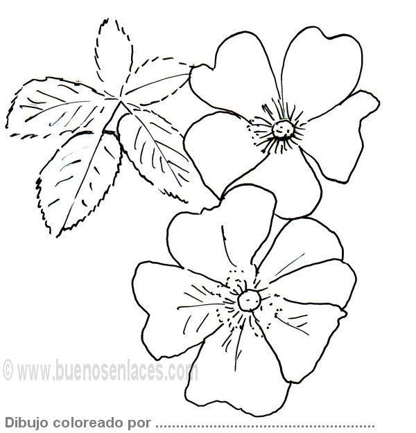 Plantillas flores para recortar - Imagui