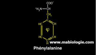 Les acides aminés