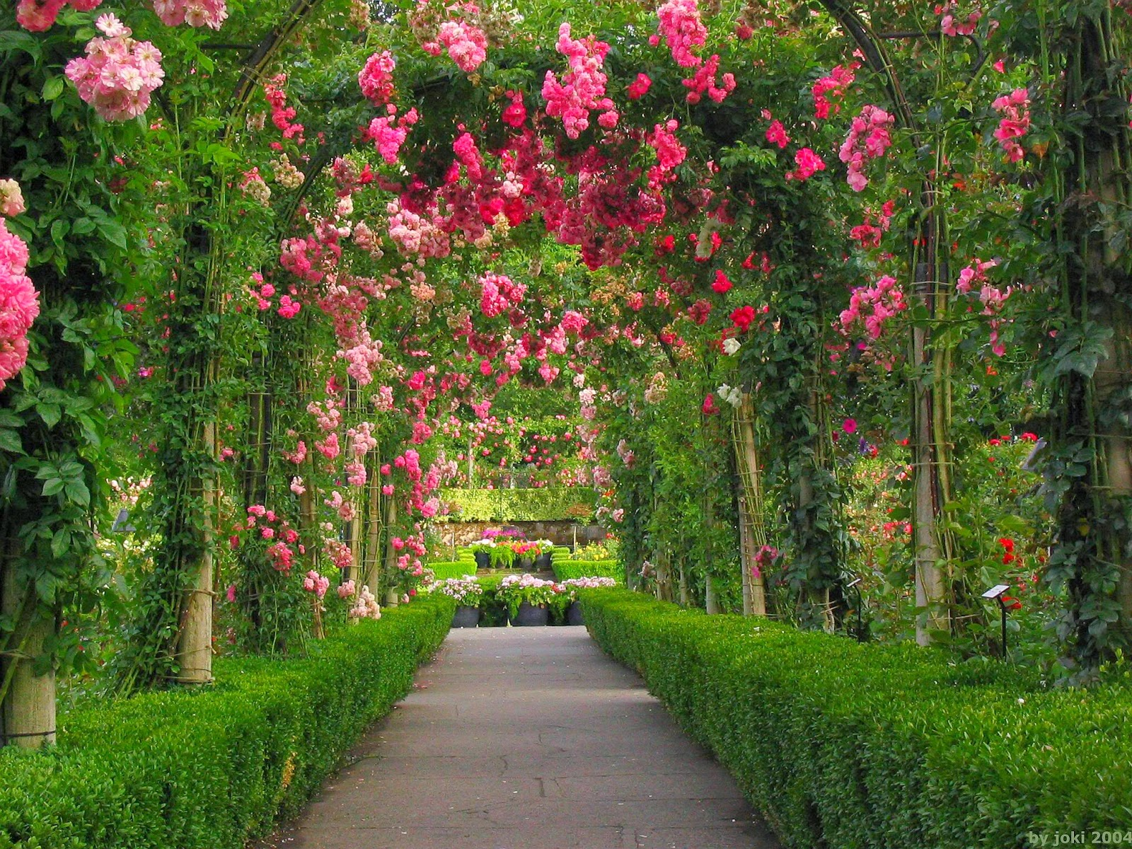 Red Rose Flower Garden Wallpaper Http Refreshrose