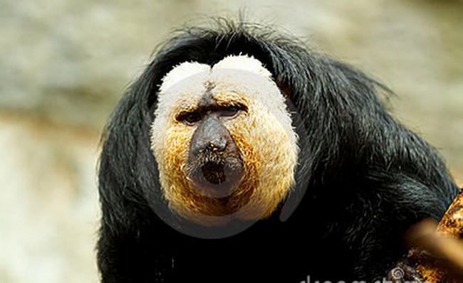 10 Hewan Mamalia Terlangka di Dunia | News Olshops