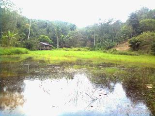 Koto Sawah [Kampuang Sawah] Mapat Tunggul Pasaman Sumatera Barat