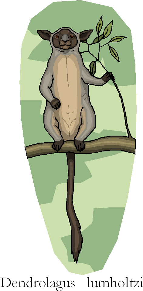 Lumholtz's Tree Kangaroo | Dendrolagus Lumholtzi Free Clipart