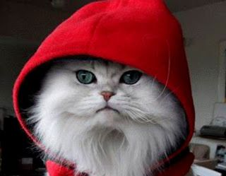 funny cat picture cat rapper creepy to love