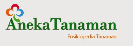 Aneka Tanaman