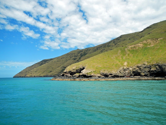 Akaroa Harbour Nature Cruise - Black Cat Cruises