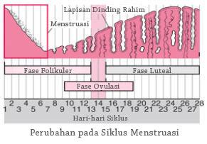 kort lutealfas progesteron