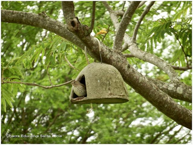 Los nidos artificiales ofrecen refugio - Chacra Educativa Santa Lucía