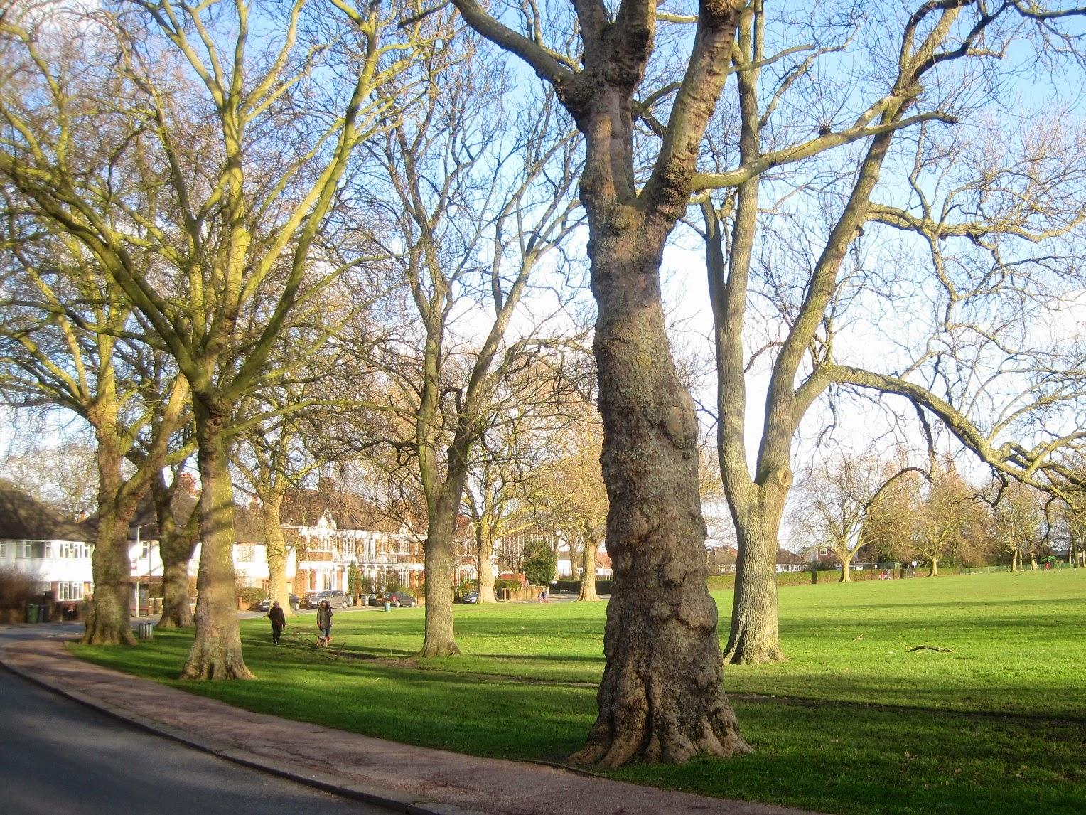 Brockley Street Trees
