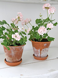 lskar Pelargoner