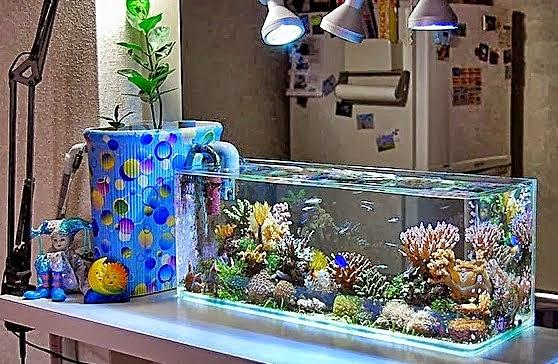 Tips Membersihkan Air Akuarium