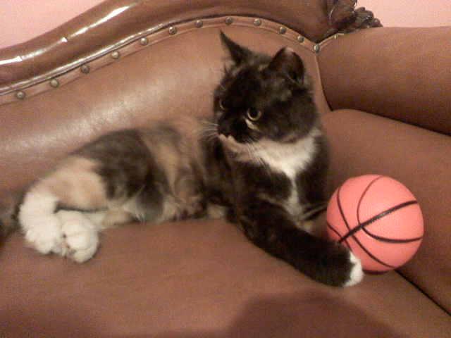 kucing dan bola
