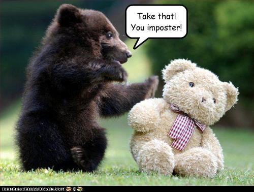 gambar binatang - foto beruang lucu