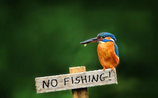 Pemancing Wajib Ada Lesen