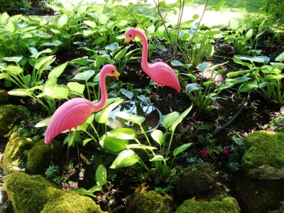 Visit the Flamingo Oasis