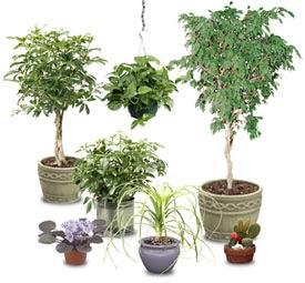 tu espazio zen tienda online decoraci n con plantas en