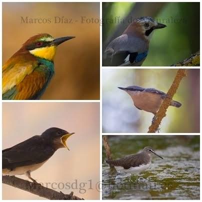 La Naturaleza en Fotos