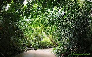 Foto-Tropical-Islands-Resort_7