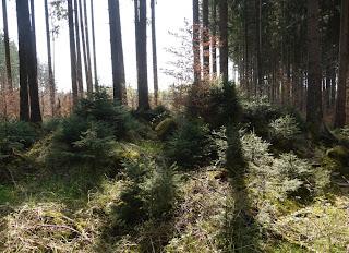 Bild 1: Grabhügel im Forstenrieder Park