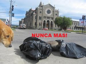 Matanza de perros en Punta Arenas