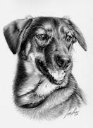 Dibujos de Perros Perros Dibujados con Carboncillo y Grafito dibujos perros pintados con grafito carboncillo