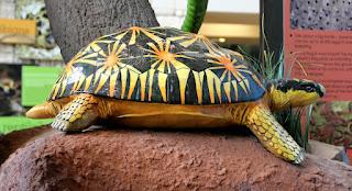 Colorful Turtle Inside MOLA