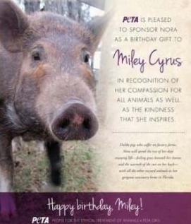 miley cyrus pet adopted pig nora
