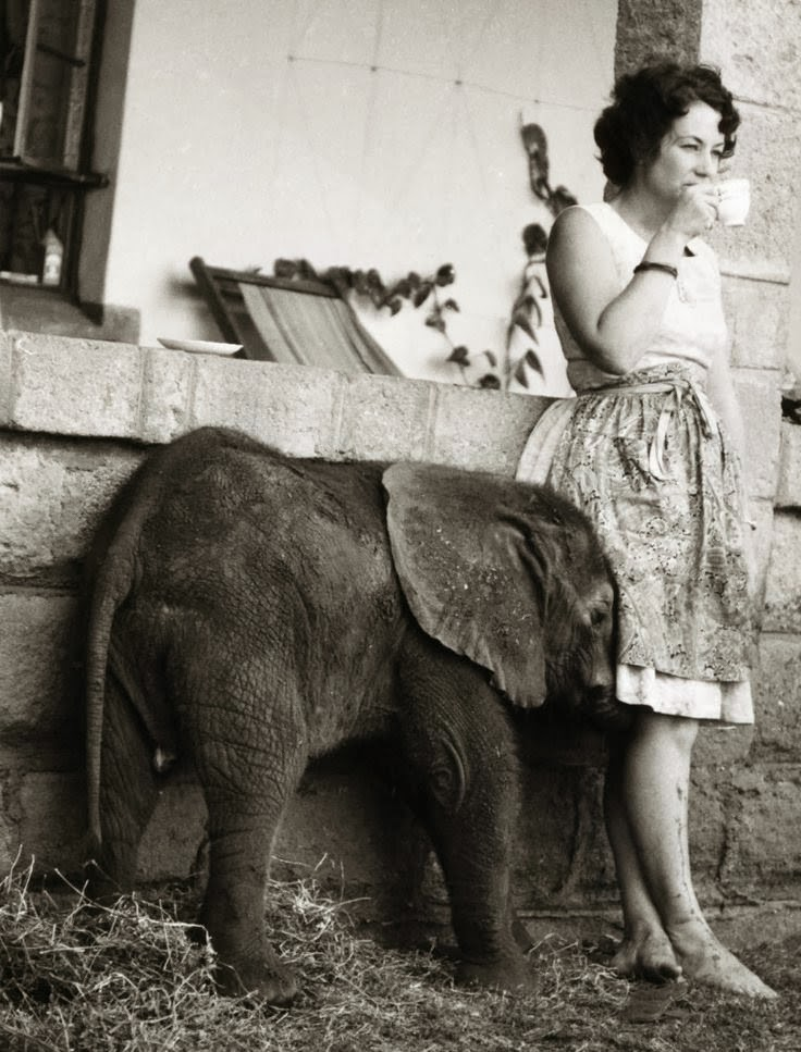 baby elephant and girl