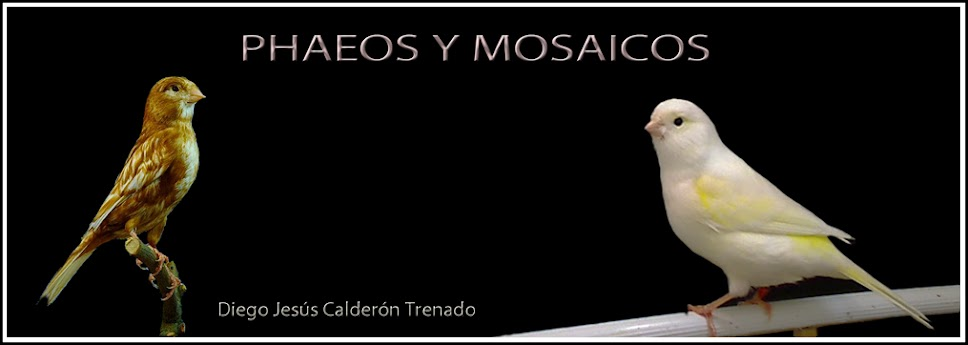 PHAEOS Y MOSAICOS