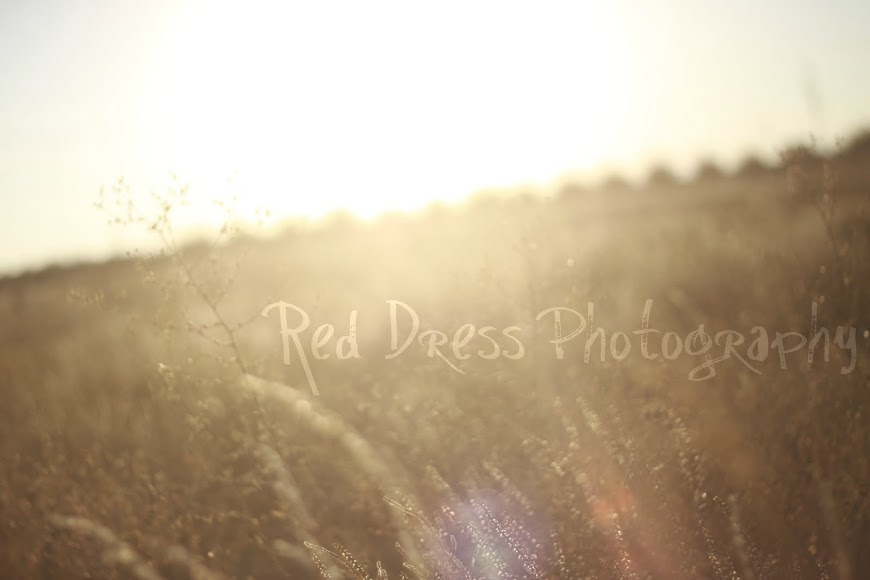Red Dress Photography