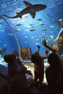Sea Life Michigan