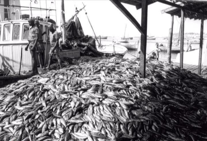Toneladas de peixe