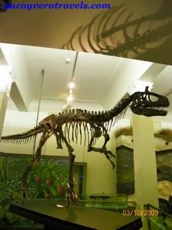 Museo Auckland Espectaculo Maori