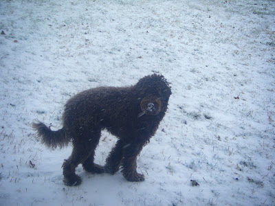 Alfie's walking in the snow, which has almost covered the grass; you can see the snowflakes falling in front of his dark shape