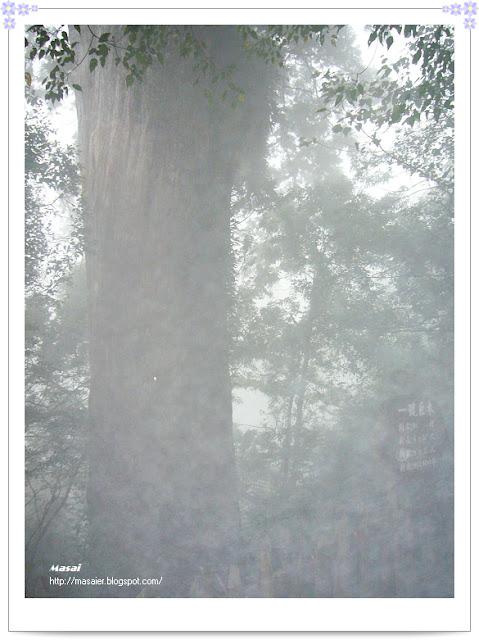 北橫拉拉山-神木2
