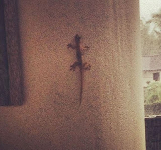 Greyson Chance Bali Ubud 2013 Lizard Trend Friends
