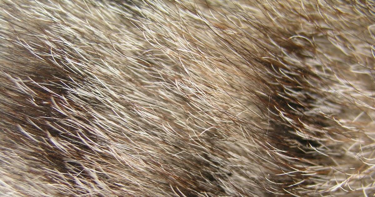 Cat Fur Like Feathers