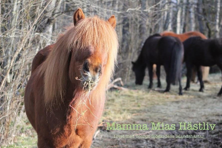 Mamma Mias hästliv
