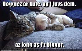funny cat and dog sleaping