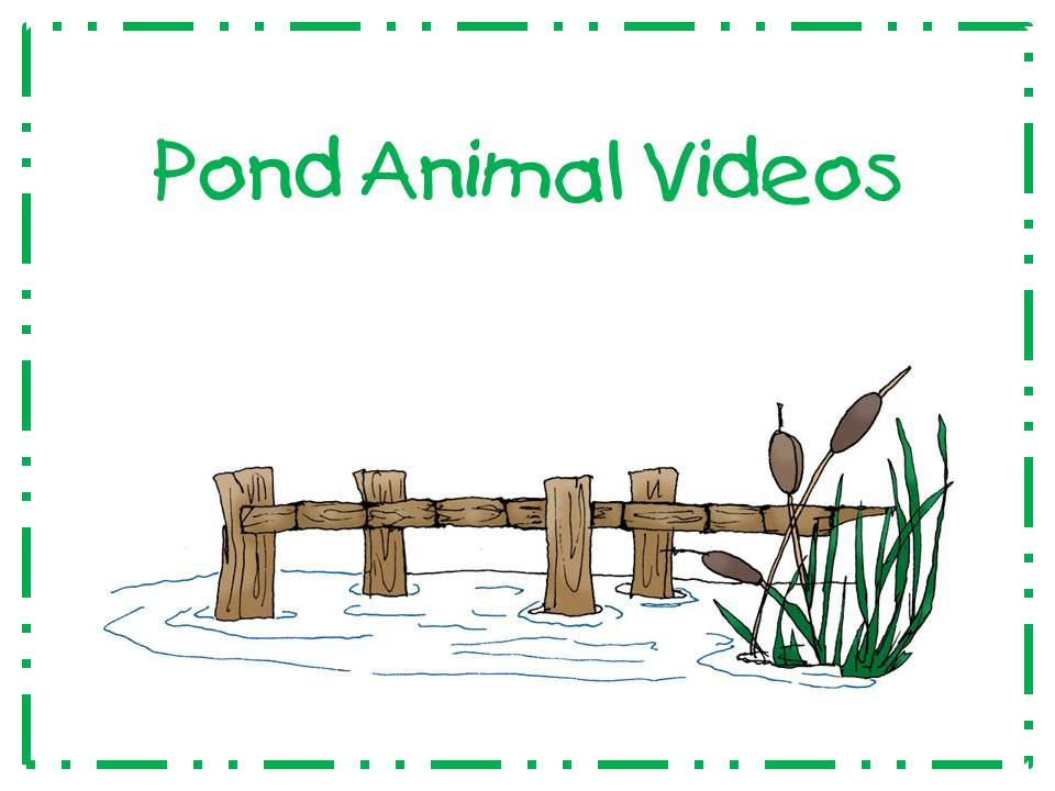 A teacher 39 s touch pond animal videos for Pond animals