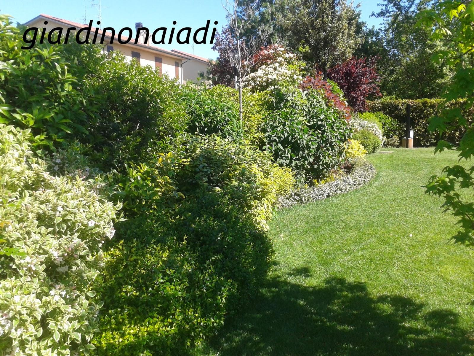 Arbusti Decorativi Da Giardino : Il giardino delle naiadi progettare bordure e aiuole prima parte