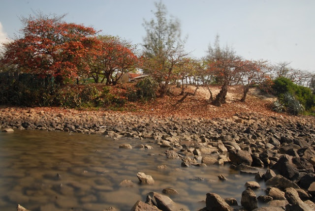 Sắc đỏ mùa thu bên Lăng Ông Hòn Yến
