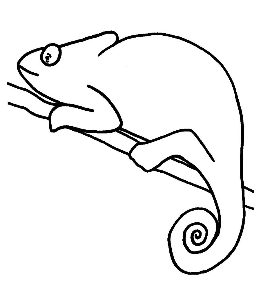 Chameleon Cartoon Outline Coloring Pages To Printable
