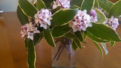 bouquet of daphne