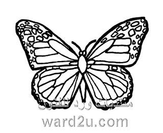 Saleem90009 رسم الفراشات منقول من منتديات وردة للفنون