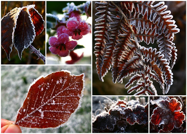 Frosted plants collage © Annie Japaud Photography, plants, frost, leaves, flowers, frozen, nature, photography
