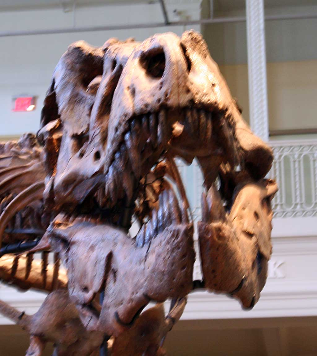mature tyrannosaurus rex skull cast at carnegie musem of natural science in pittsburgh pennsylvania 2011 cretaceous mesozoic montana Jonny Fox is gay,